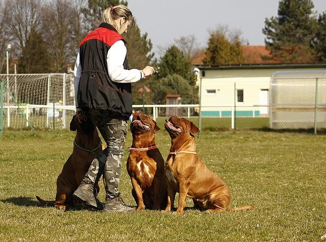 Ideias de Negócios Home Based para Quem Gosta de Animais - Adestrador