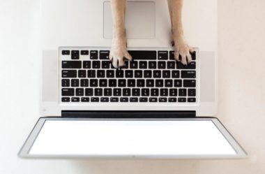 Ideias de Negócios Home Based para Quem Gosta de Animais