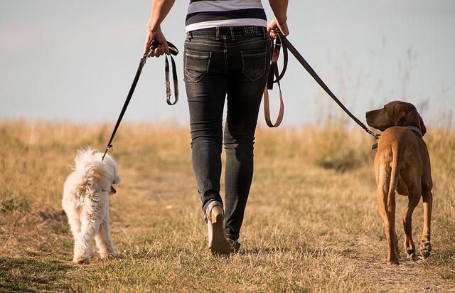 Ideias de Negócios Home Based para Quem Gosta de Animais - Dog Walker